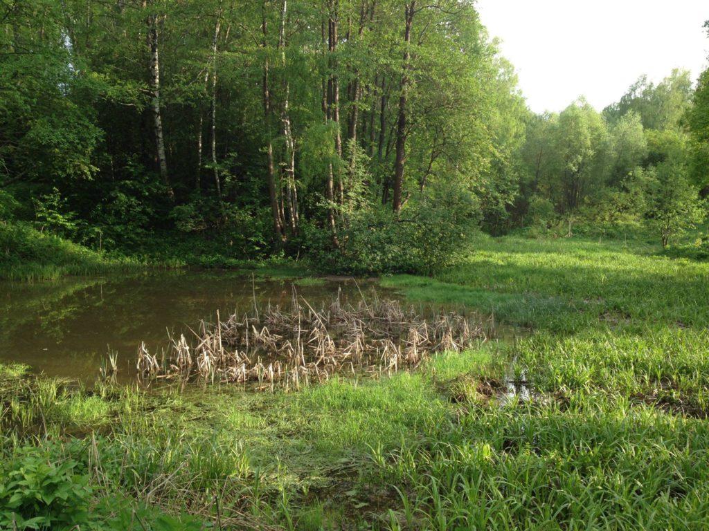 место для строительства пруда